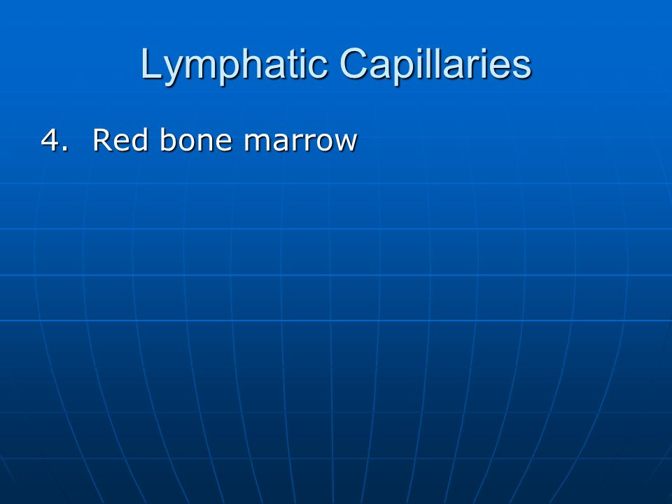 Lymphatic Capillaries 4. Red bone marrow