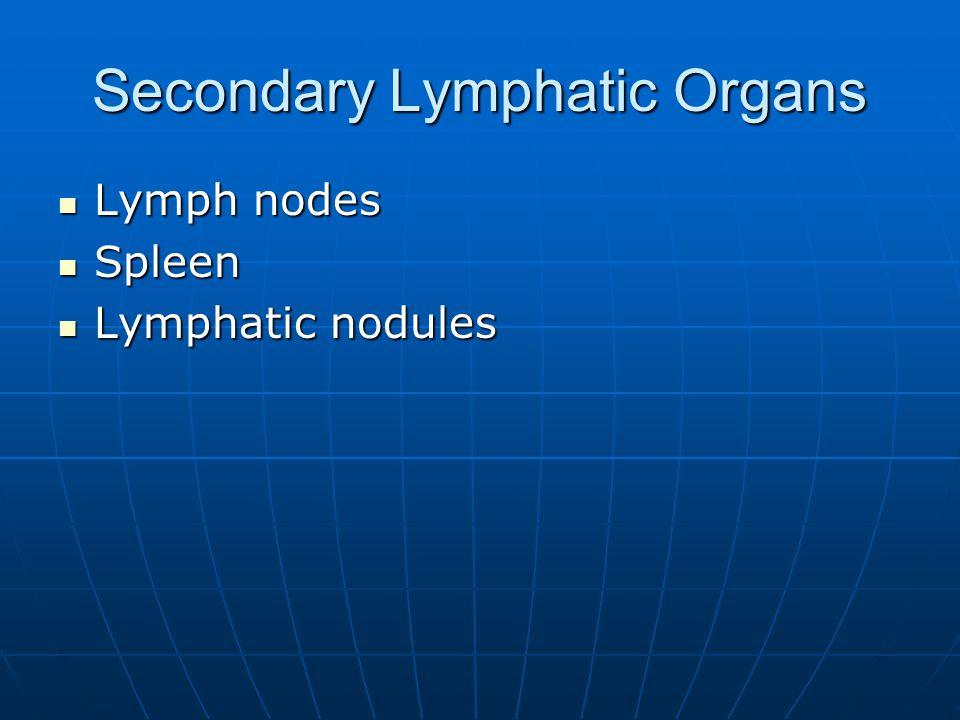 Secondary Lymphatic Organs Lymph nodes Lymph nodes Spleen Spleen Lymphatic nodules Lymphatic nodules