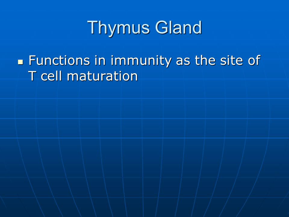Thymus Gland Functions in immunity as the site of T cell maturation Functions in immunity as the site of T cell maturation