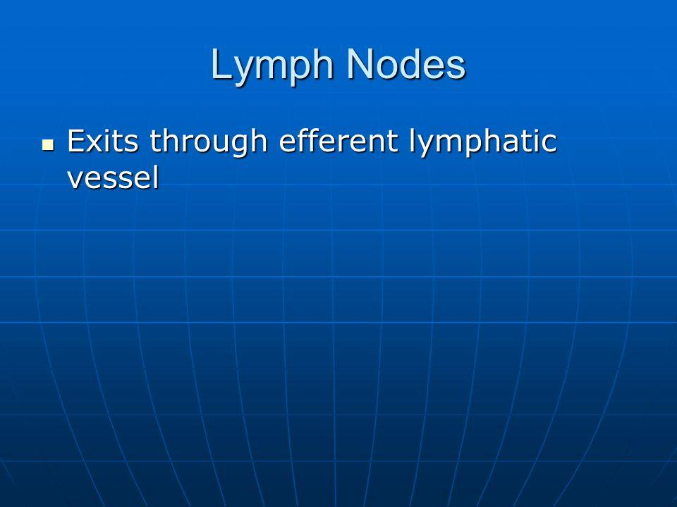 Lymph Nodes Exits through efferent lymphatic vessel Exits through efferent lymphatic vessel