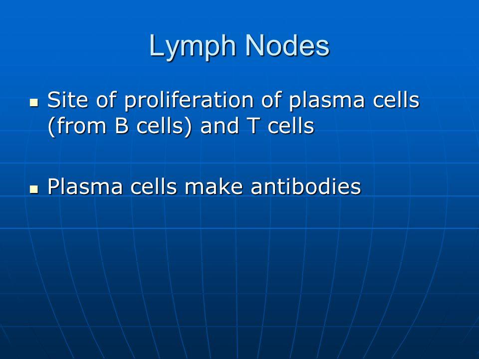 Lymph Nodes Site of proliferation of plasma cells (from B cells) and T cells Site of proliferation of plasma cells (from B cells) and T cells Plasma c