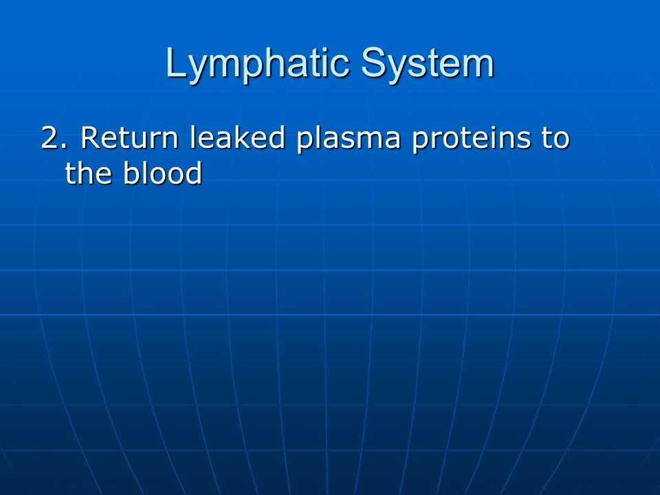 White Pulp Lymphatic Tissue Lymphatic Tissue