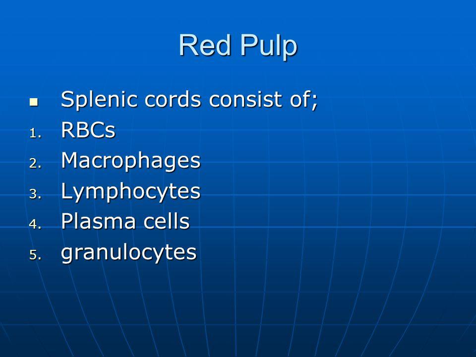 Red Pulp Splenic cords consist of; Splenic cords consist of; 1. RBCs 2. Macrophages 3. Lymphocytes 4. Plasma cells 5. granulocytes