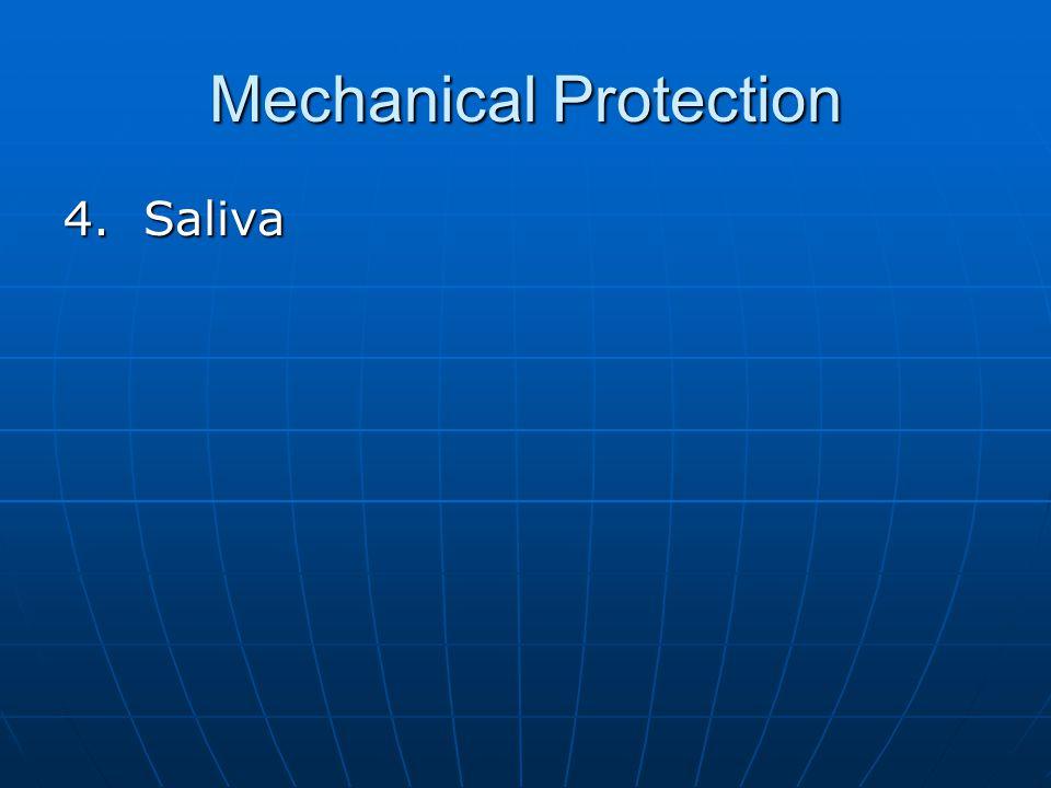 Mechanical Protection 4. Saliva