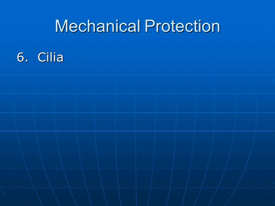Mechanical Protection 6. Cilia