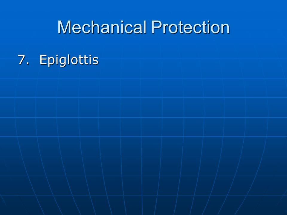 Mechanical Protection 7. Epiglottis