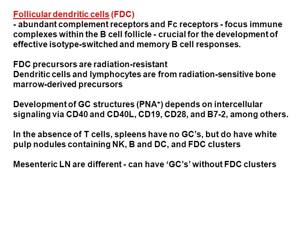 Follicular dendritic cells (FDC) - abundant complement receptors and Fc receptors - focus immune complexes within the B cell follicle - crucial for the development of effective isotype-switched and memory B cell responses.