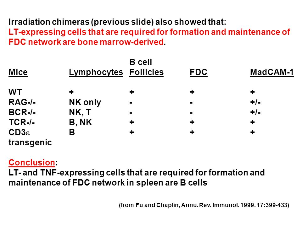 Irradiation chimeras (previous slide) also showed that: LT-expressing cells that are required for formation and maintenance of FDC network are bone marrow-derived.