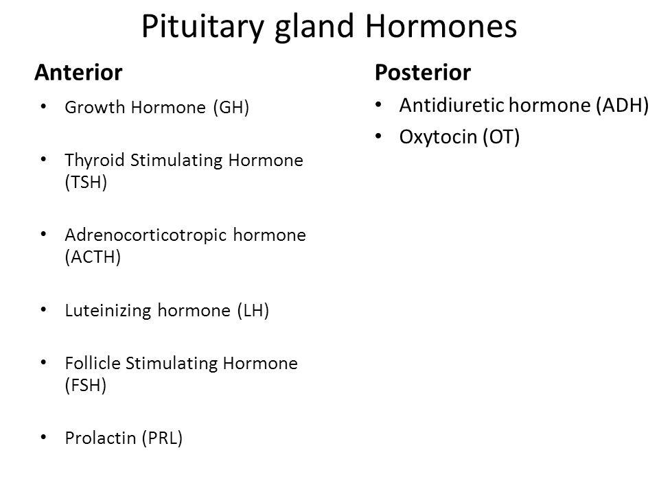 Pituitary gland Hormones Anterior Growth Hormone (GH) Thyroid Stimulating Hormone (TSH) Adrenocorticotropic hormone (ACTH) Luteinizing hormone (LH) Follicle Stimulating Hormone (FSH) Prolactin (PRL) Posterior Antidiuretic hormone (ADH) Oxytocin (OT)