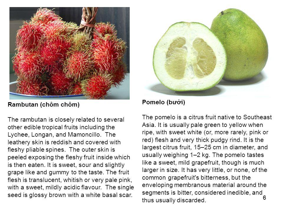 66 Pomelo (bưởi) The pomelo is a citrus fruit native to Southeast Asia.