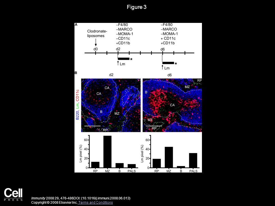 Figure 3 Immunity 2008 29, 476-486DOI: (10.1016/j.immuni.2008.06.013) Copyright © 2008 Elsevier Inc.