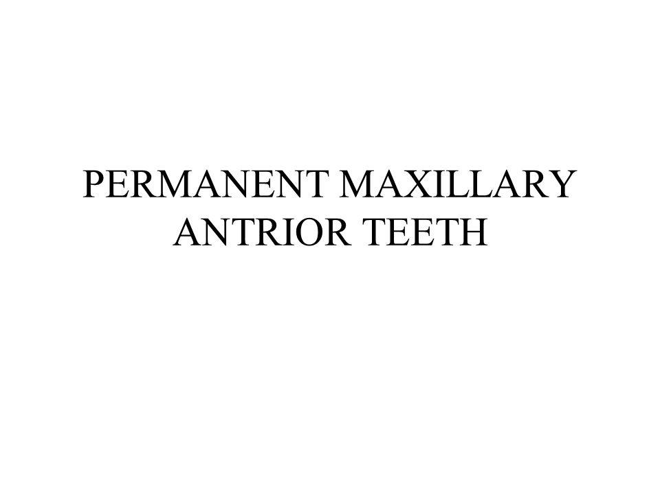 PERMANENT MAXILLARY ANTRIOR TEETH