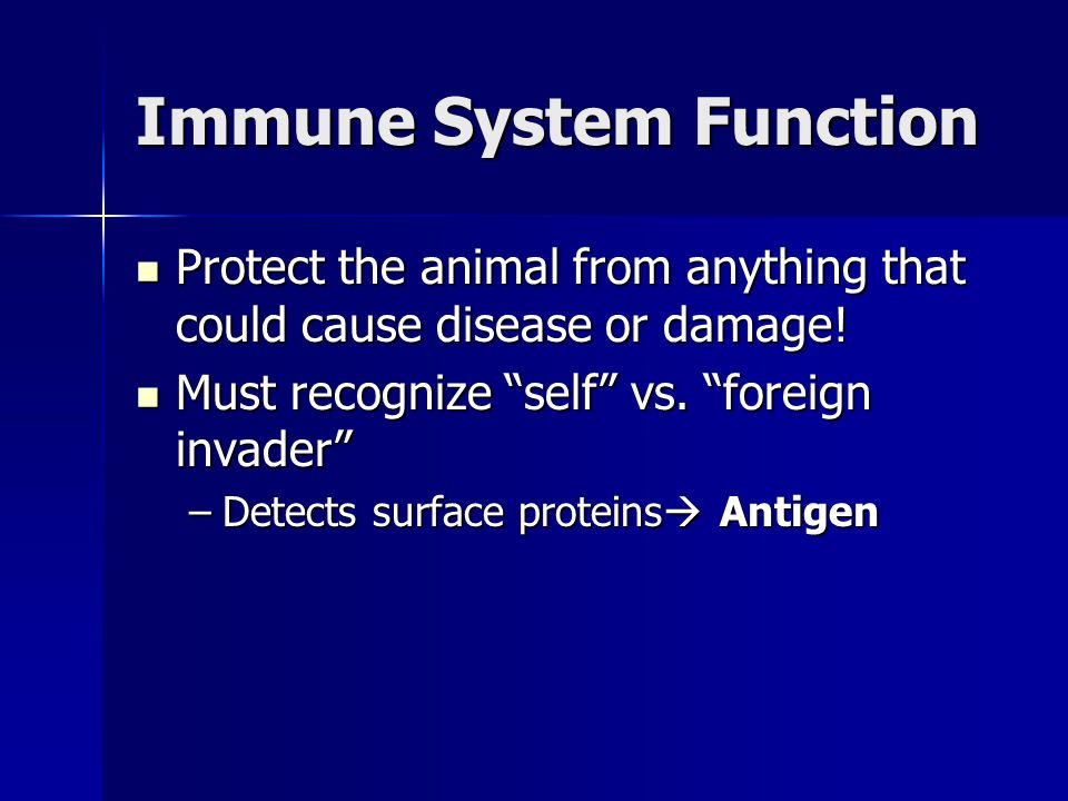 Immune System Function Protect the animal from anything that could cause disease or damage.