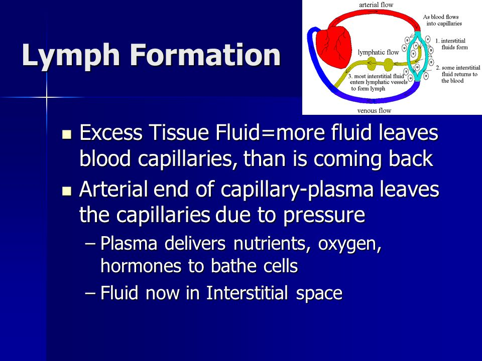 Lymph Formation Excess Tissue Fluid=more fluid leaves blood capillaries, than is coming back Excess Tissue Fluid=more fluid leaves blood capillaries, than is coming back Arterial end of capillary-plasma leaves the capillaries due to pressure Arterial end of capillary-plasma leaves the capillaries due to pressure –Plasma delivers nutrients, oxygen, hormones to bathe cells –Fluid now in Interstitial space