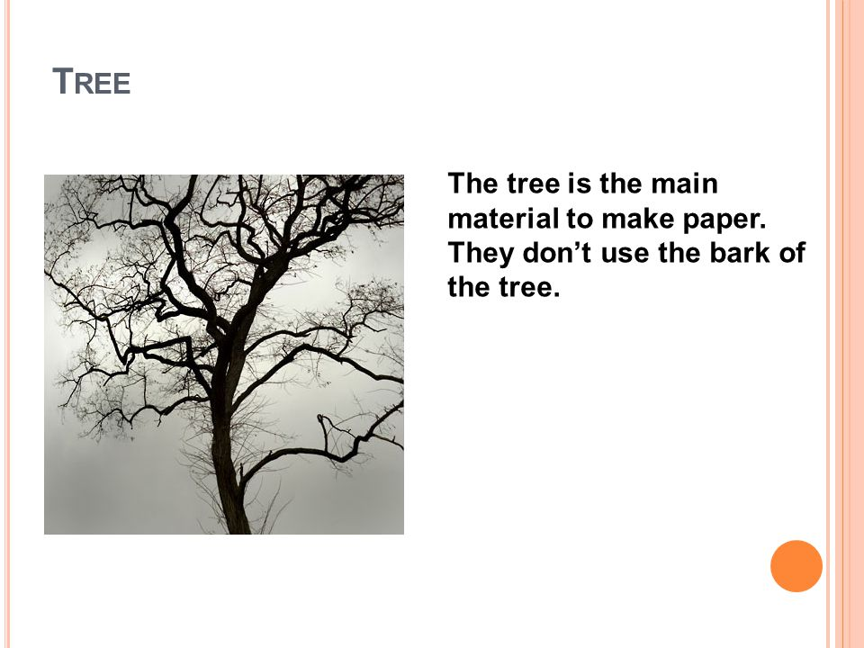 T REE The tree is the main material to make paper. They don't use the bark of the tree.