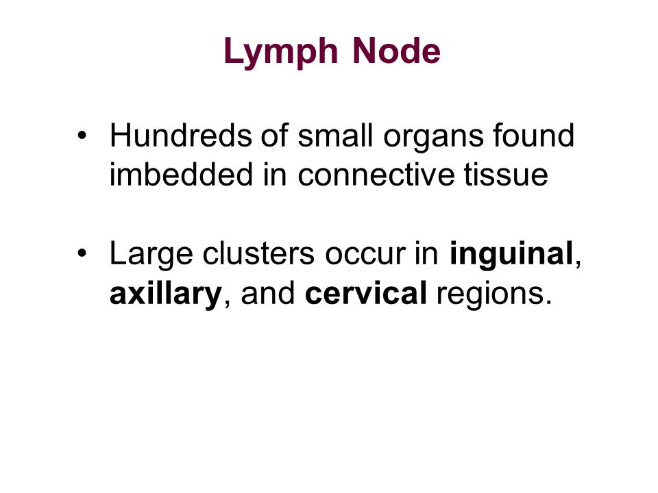 Hundreds of small organs found imbedded in connective tissue Large clusters occur in inguinal, axillary, and cervical regions. Lymph Node