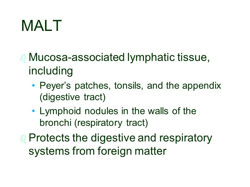 MALT b b Mucosa-associated lymphatic tissue, including Peyer's patches, tonsils, and the appendix (digestive tract) Lymphoid nodules in the walls of t