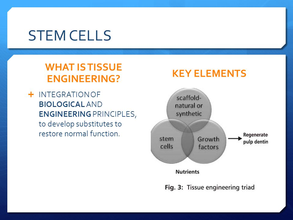 STEM CELLS WHAT IS TISSUE ENGINEERING.