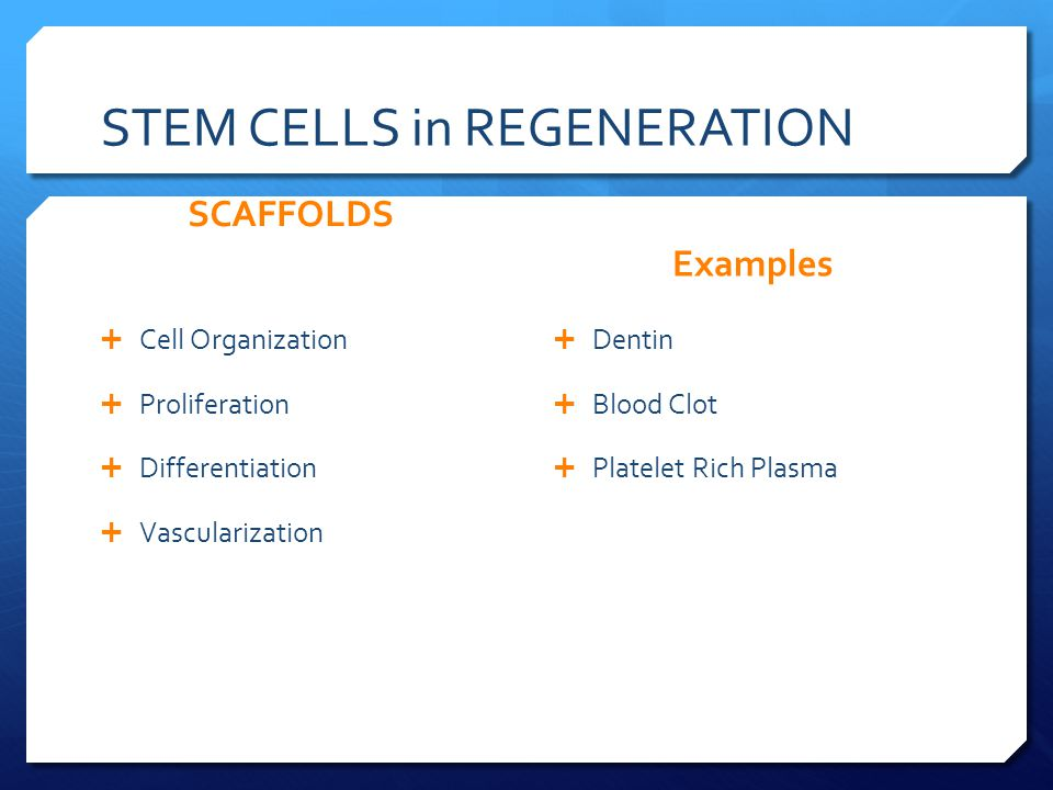 STEM CELLS in REGENERATION SCAFFOLDS  Cell Organization  Proliferation  Differentiation  Vascularization Examples  Dentin  Blood Clot  Platelet Rich Plasma