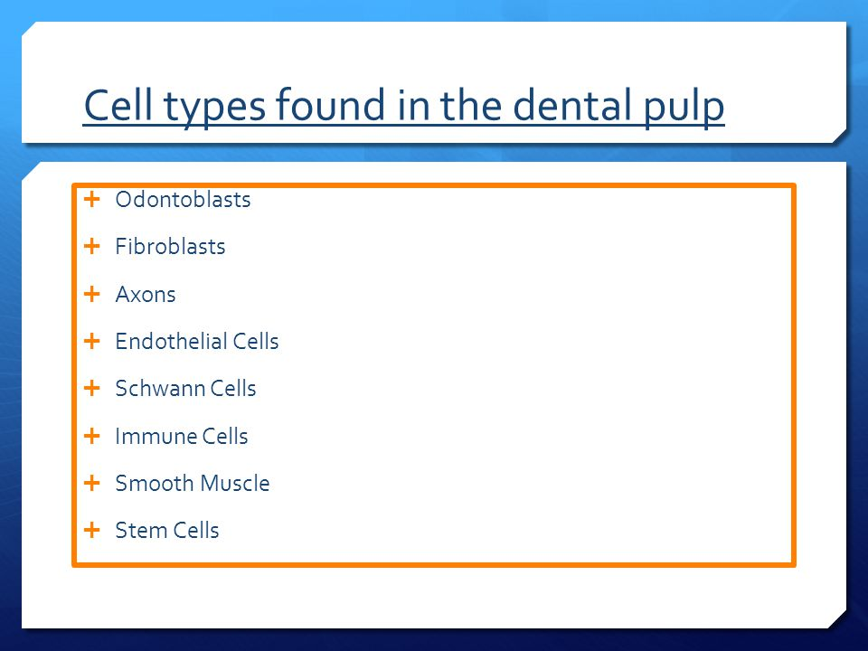 Cell types found in the dental pulp  Odontoblasts  Fibroblasts  Axons  Endothelial Cells  Schwann Cells  Immune Cells  Smooth Muscle  Stem Cells