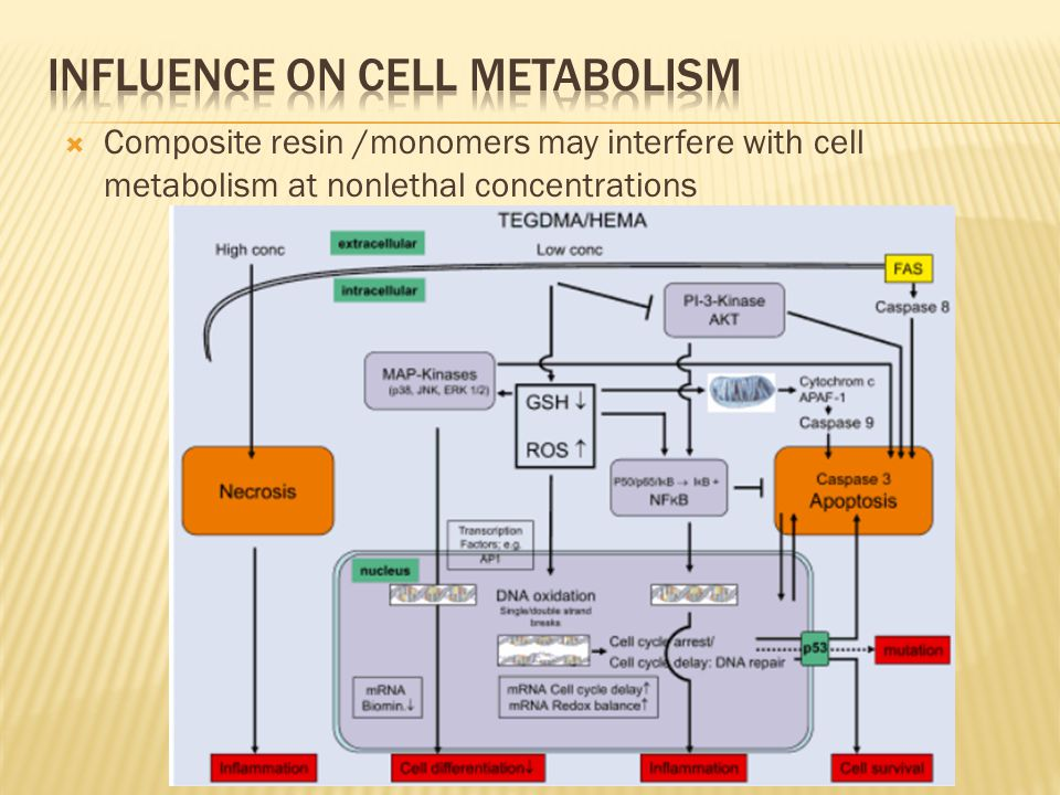  Composite resin /monomers may interfere with cell metabolism at nonlethal concentrations