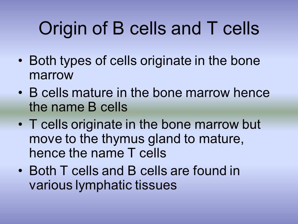 Origin of B cells and T cells Both types of cells originate in the bone marrow B cells mature in the bone marrow hence the name B cells T cells originate in the bone marrow but move to the thymus gland to mature, hence the name T cells Both T cells and B cells are found in various lymphatic tissues