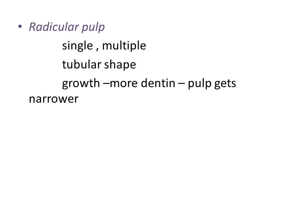 Radicular pulp single, multiple tubular shape growth –more dentin – pulp gets narrower