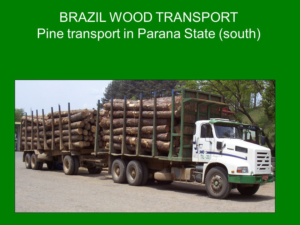 BRAZIL WOOD TRANSPORT Pine transport in Parana State (south)