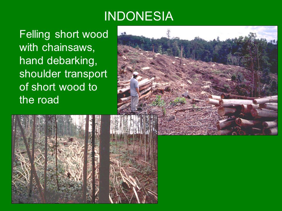 INDONESIA Felling short wood with chainsaws, hand debarking, shoulder transport of short wood to the road