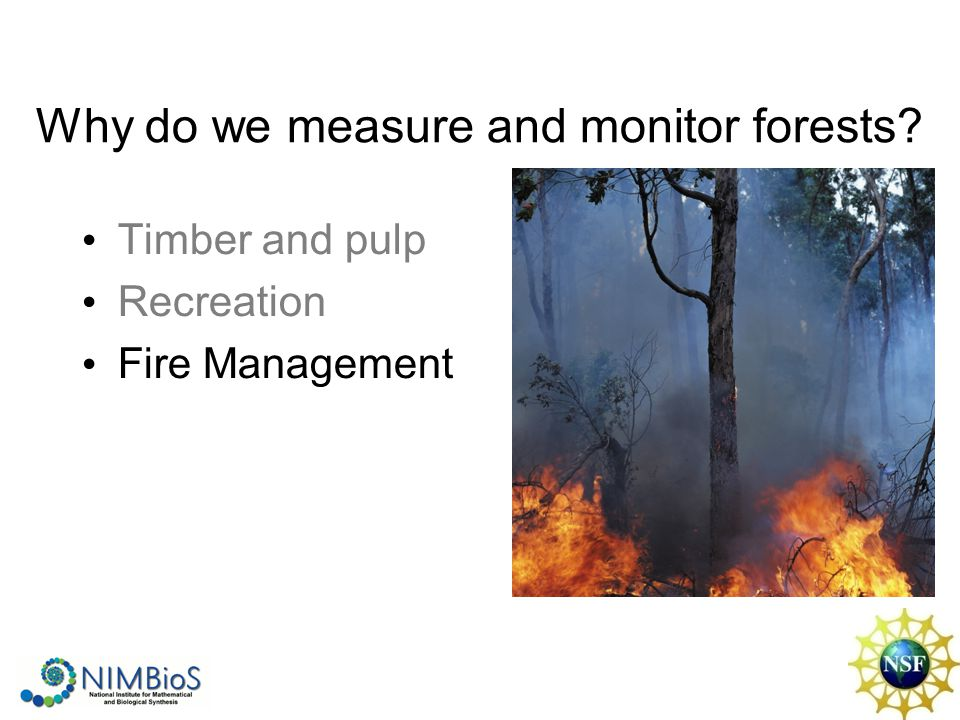 Why do we measure and monitor forests Timber and pulp Recreation Fire Management