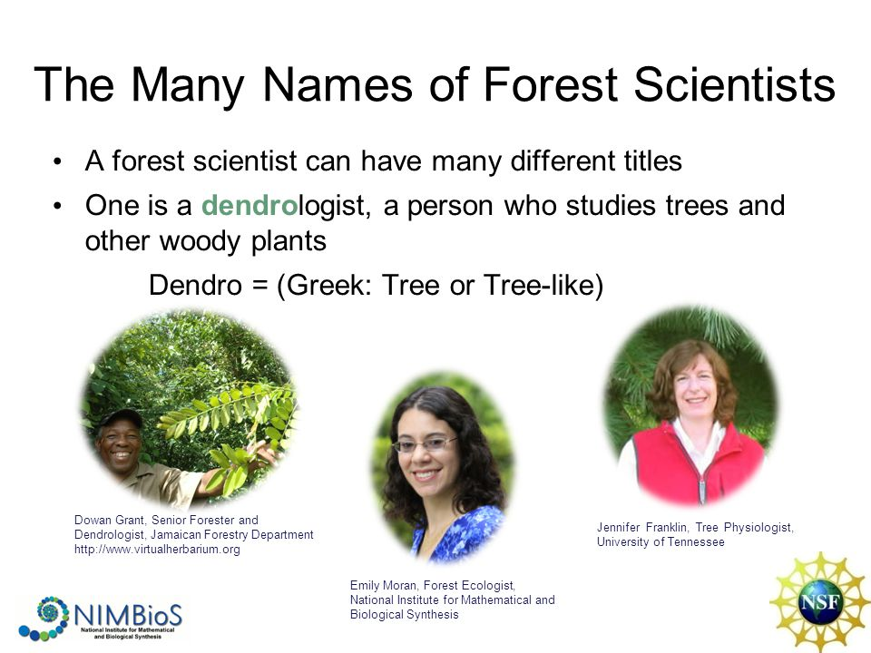 The Many Names of Forest Scientists A forest scientist can have many different titles One is a dendrologist, a person who studies trees and other wood