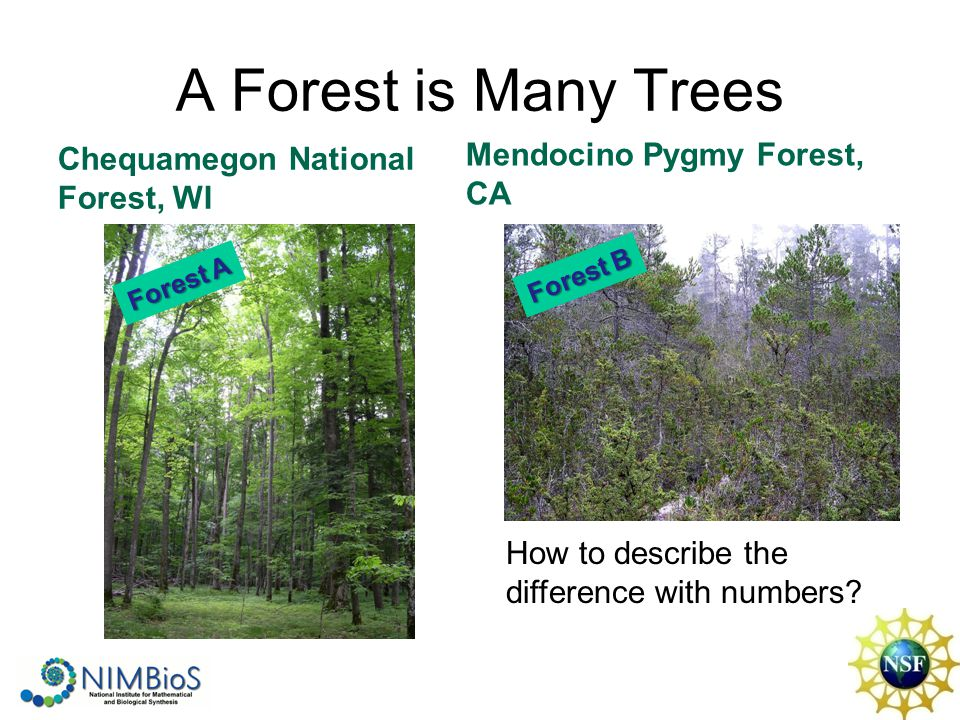 A Forest is Many Trees Chequamegon National Forest, WI Mendocino Pygmy Forest, CA How to describe the difference with numbers? Forest A Forest B