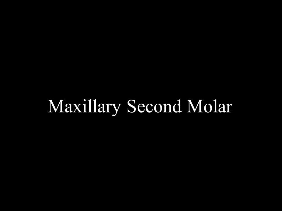 Maxillary Second Molar