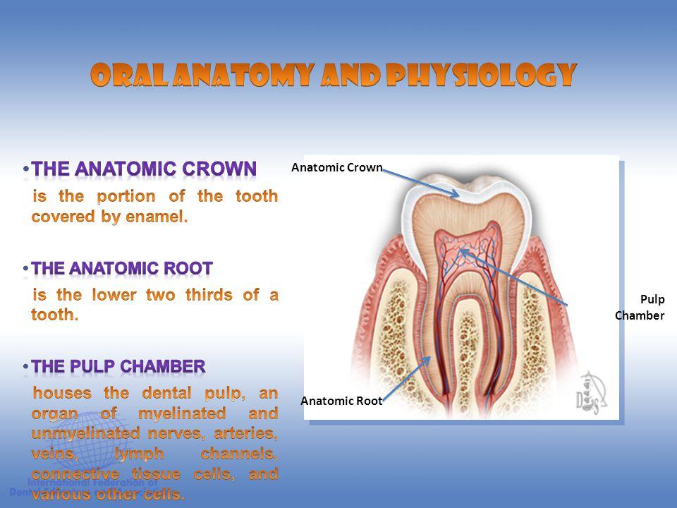 Enamel Dentin Cementum Dental Pulp