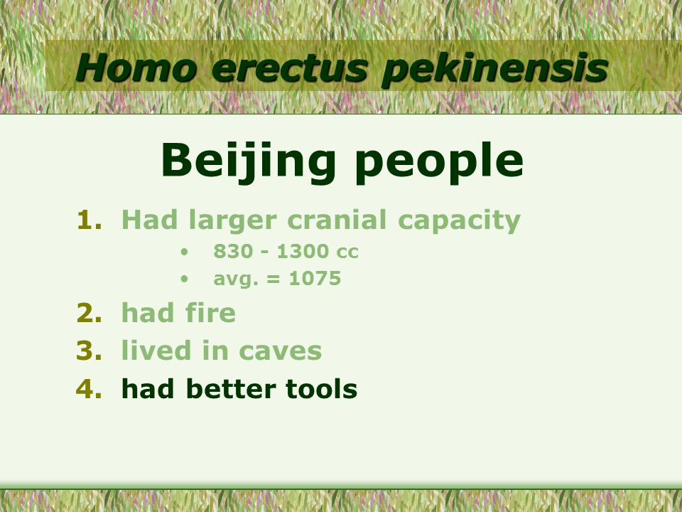 Homo erectus pekinensis 1.Had larger cranial capacity 830 - 1300 cc avg. = 1075 2.had fire 3.lived in caves 4.had better tools Beijing people