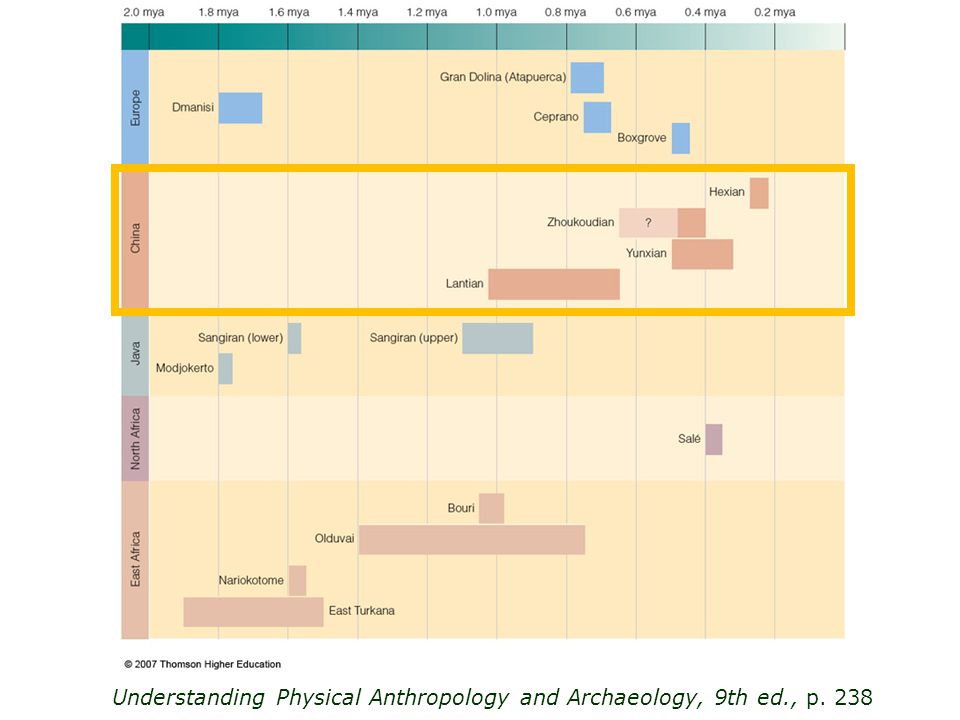 Understanding Physical Anthropology and Archaeology, 9th ed., p. 238