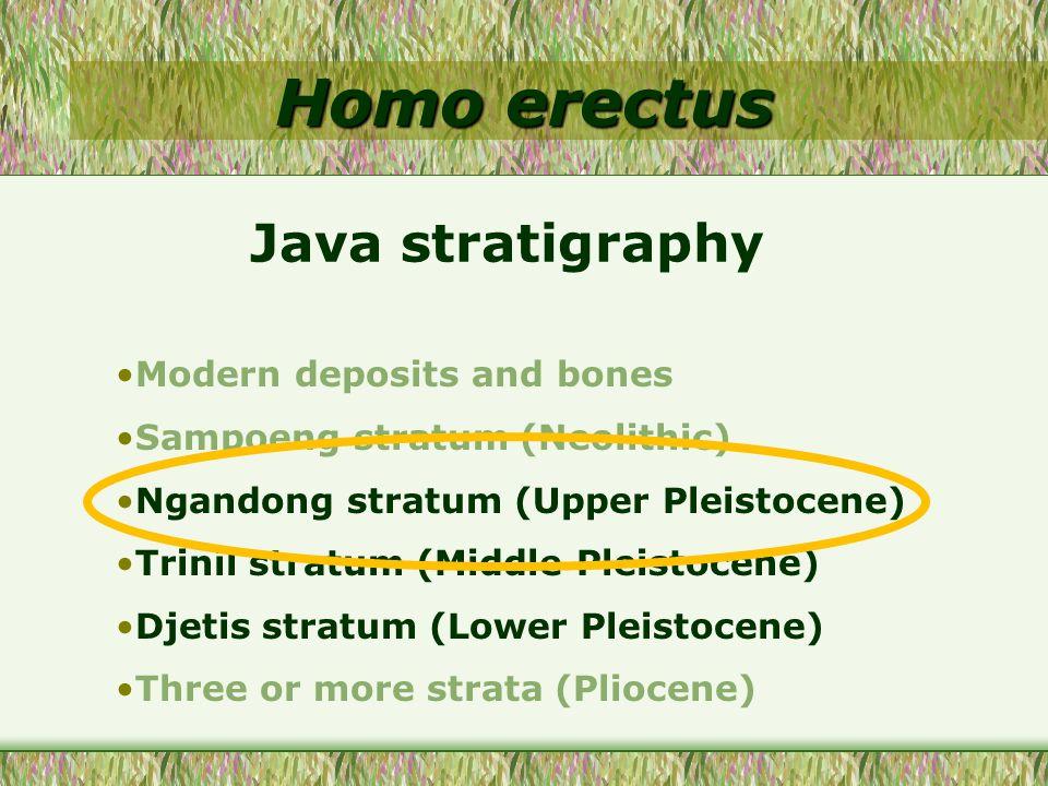 Homo erectus Modern deposits and bones Sampoeng stratum (Neolithic) Ngandong stratum (Upper Pleistocene) Trinil stratum (Middle Pleistocene) Djetis stratum (Lower Pleistocene) Three or more strata (Pliocene) Java stratigraphy