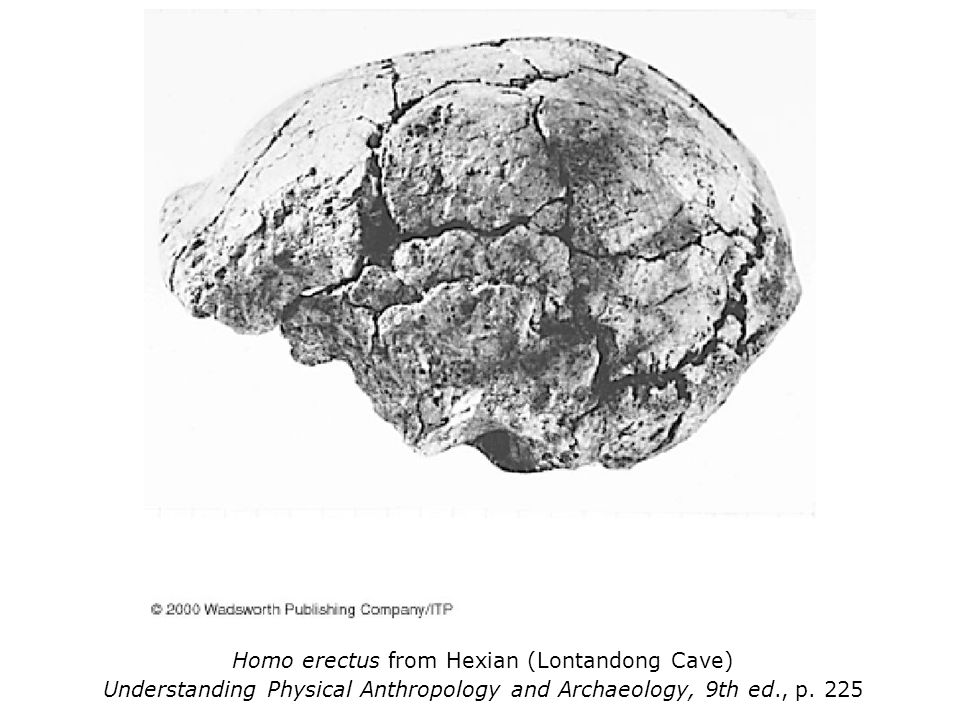 Homo erectus from Hexian (Lontandong Cave) Understanding Physical Anthropology and Archaeology, 9th ed., p.