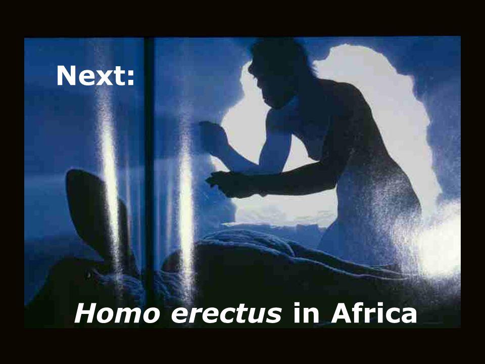 Homo erectus in Africa Next: