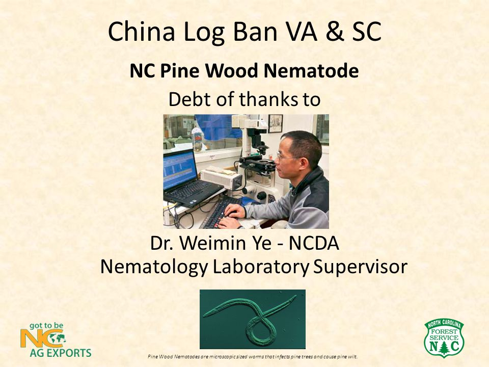 China Log Ban VA & SC NC Pine Wood Nematode Debt of thanks to Dr. Weimin Ye - NCDA Nematology Laboratory Supervisor Pine Wood Nematodes are microscopi