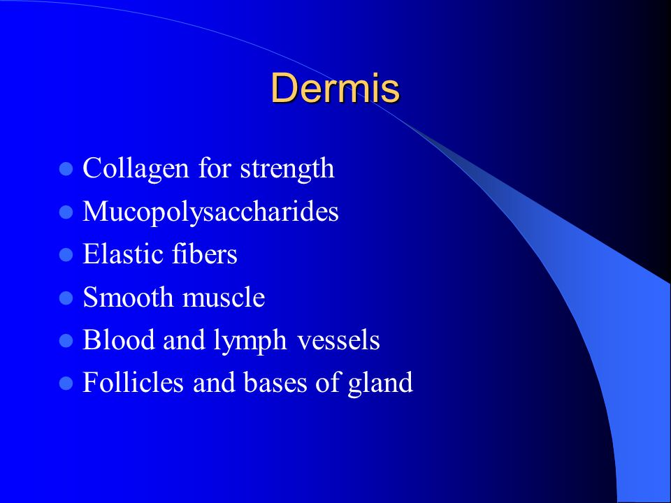 Dermis Collagen for strength Mucopolysaccharides Elastic fibers Smooth muscle Blood and lymph vessels Follicles and bases of gland