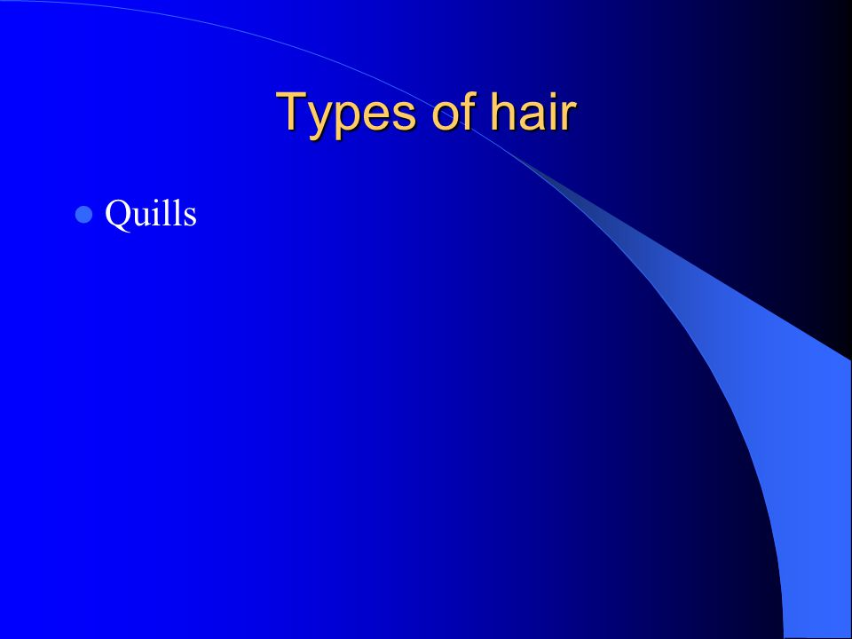 Types of hair Quills