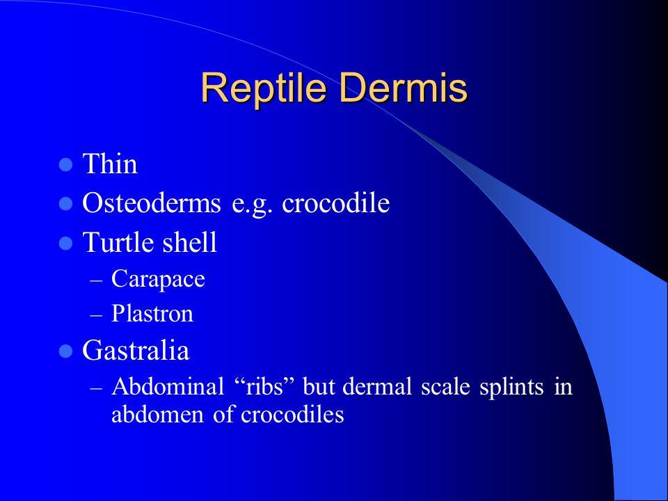 Reptile Dermis Thin Osteoderms e.g.