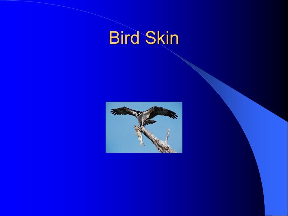 Bird Skin