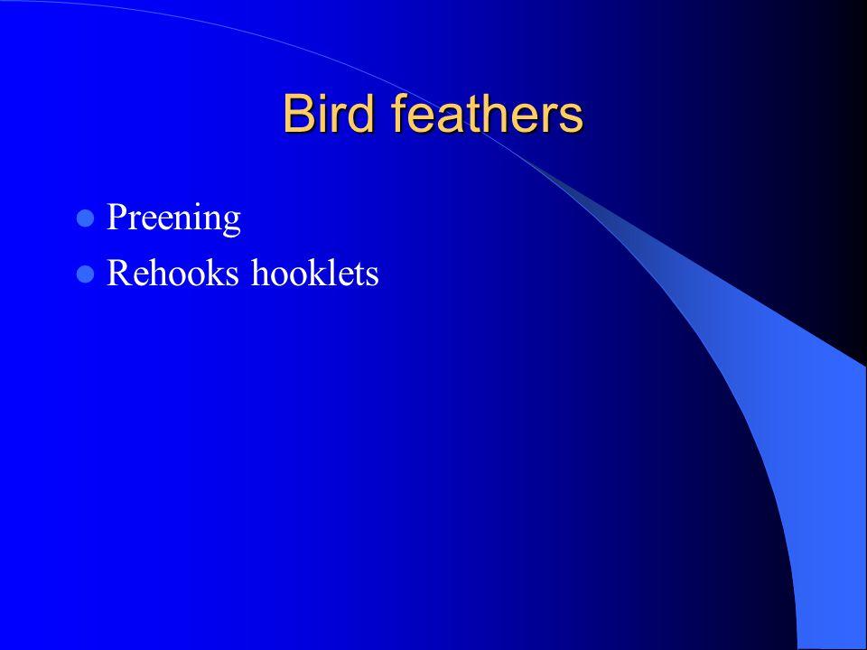 Bird feathers Preening Rehooks hooklets