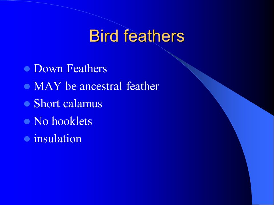 Bird feathers Down Feathers MAY be ancestral feather Short calamus No hooklets insulation