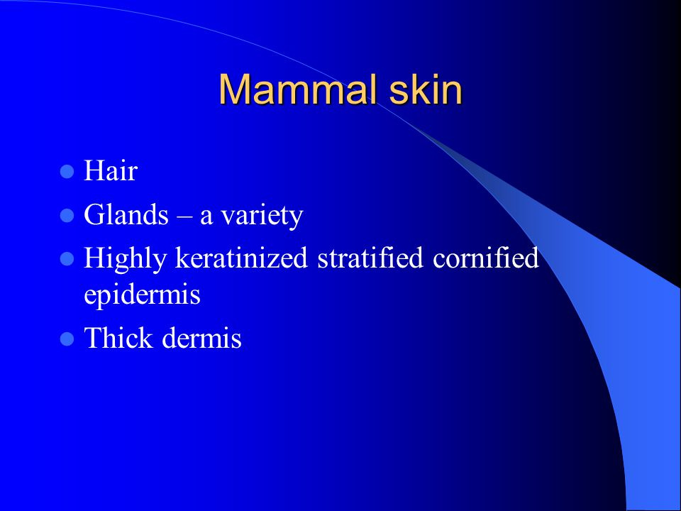 Mammal skin Hair Glands – a variety Highly keratinized stratified cornified epidermis Thick dermis