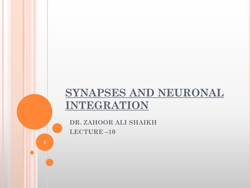 ANATOMY OF CHEMICAL SYNAPSE [CONT]  Pre-synaptic Neuron—It conducts the impulse and ends in a slight swelling, the SYNAPTIC KNOB.