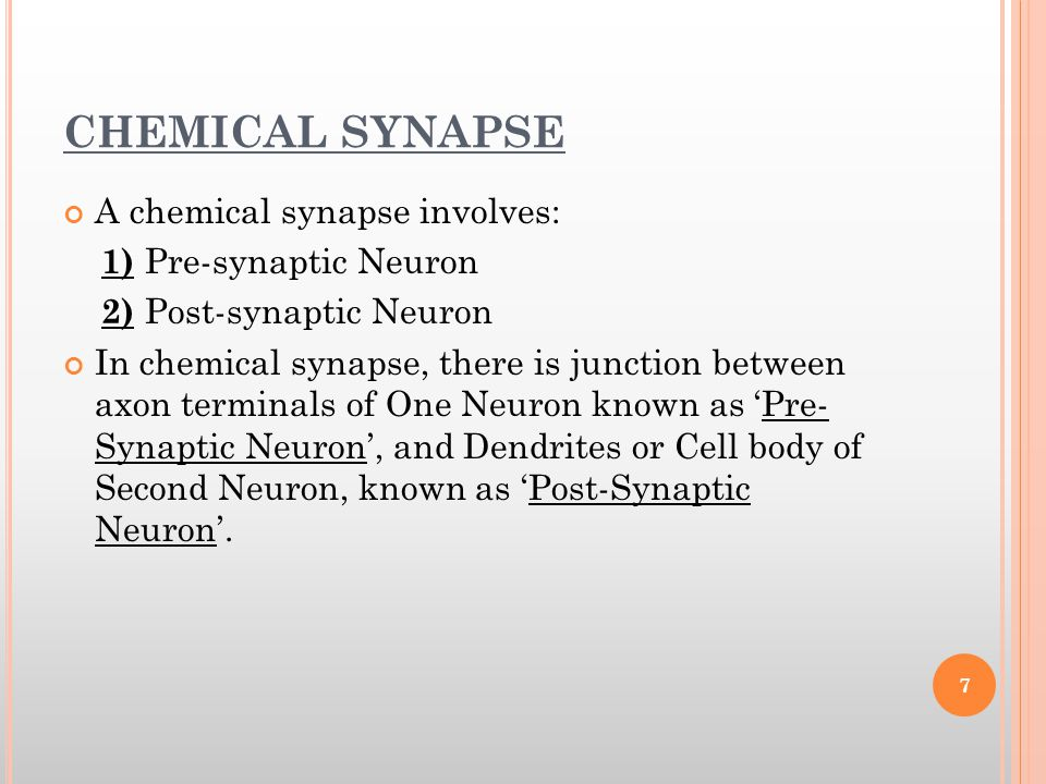 TYPES OF SYNAPSE There are two types of Synapse: 1.