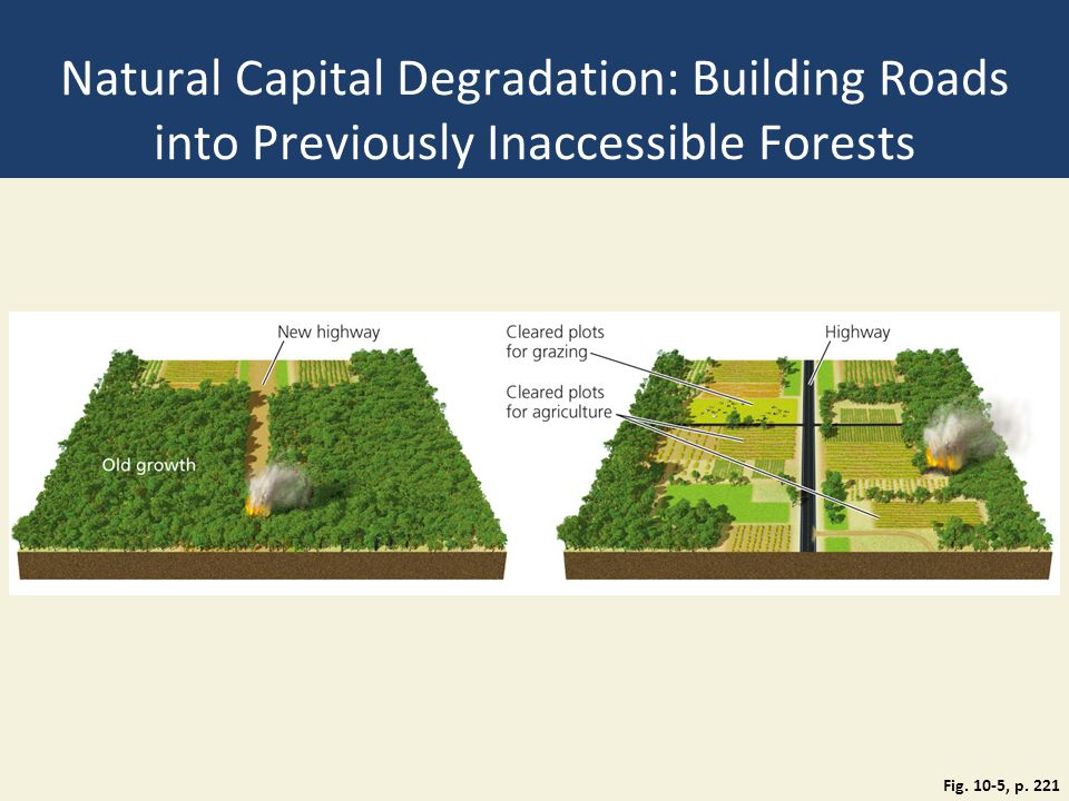 Natural Capital Degradation: Building Roads into Previously Inaccessible Forests Fig. 10-5, p. 221